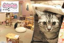 60%OFF【800円】≪アットホームな雰囲気のカフェで12匹の猫ちゃんと過ごす癒しの時間♪ドリンクを飲みながらのんびりリラックスできる...